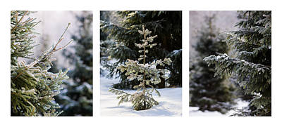 Triptych - Christmas Trees In The Forest - Featured 3 Print by Alexander Senin