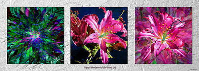 Photograph - Triptych Development Of Star Gazing Lily by Michele Avanti