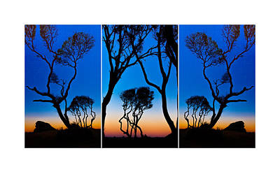 Photograph - Triptych Trees Image Art by Jo Ann Tomaselli