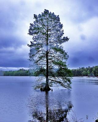 The Healing Tree - Trap Pond State Park Delaware Art Print