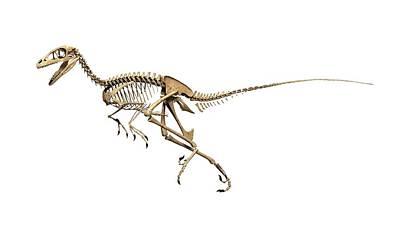 Paleozoology Photograph - Troodon Dinosaur Skeleton by Jose Antonio Pe�as