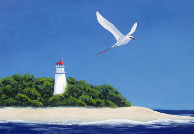 Painting - Tropic Bird by David Clode
