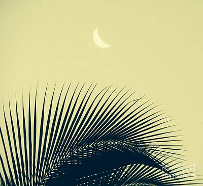 Photograph - Tropic Moon by Fred  Sheridan