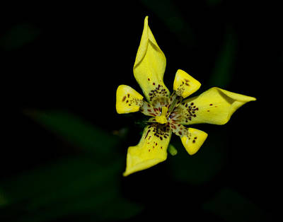 Art Print featuring the photograph Tropic Yellow by Miguel Winterpacht