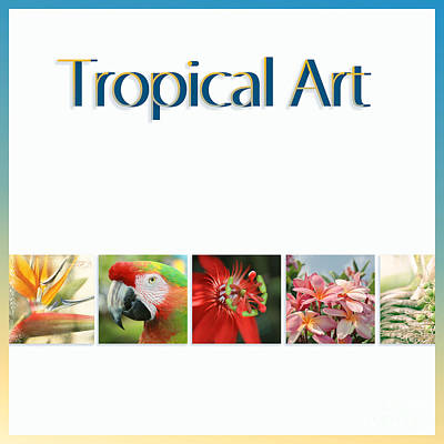Photograph - Tropical Art by Sharon Mau