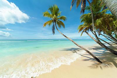 Photograph - Tropical Beach, Caribbean by John Harper