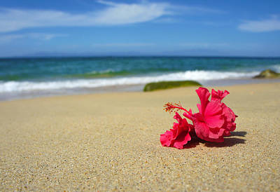 Pink Photograph - Tropical Beach Flower by Aged Pixel