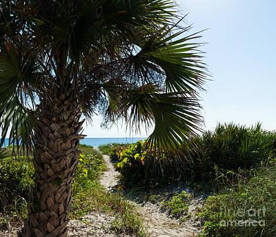 Blue Grapes Photograph - Tropical Beach Path by Michelle Wiarda