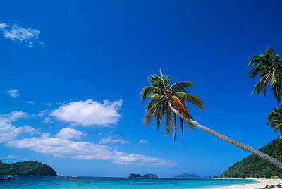 Tropical Beach With Coconut Palms Print by Panoramic Images