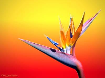 Friendly Digital Art - Tropical Beauty by Joyce Dickens