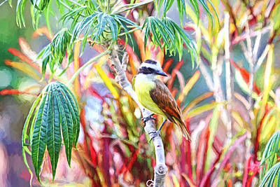 Photograph - Tropical Bird In Colorful Costa Rica by Peggy Collins