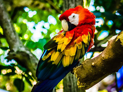 Photograph - Tropical Bird by Sara Frank