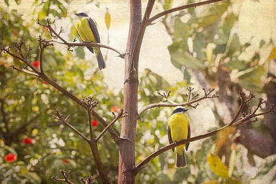 Photograph - Tropical Birds In A Tree by Peggy Collins
