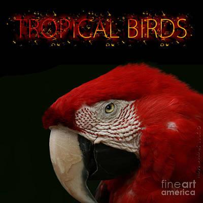 Photograph - Tropical Birds by Sharon Mau