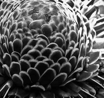 Photograph - Tropical Black And White by Julie Grandfield