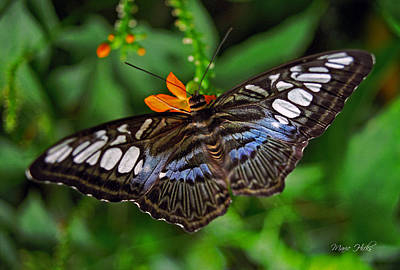 Photograph - Tropical Butterfly by Marie Hicks