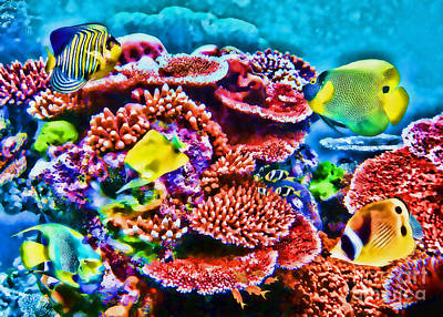 Photograph - Tropical Coral Reef by Olga Hamilton