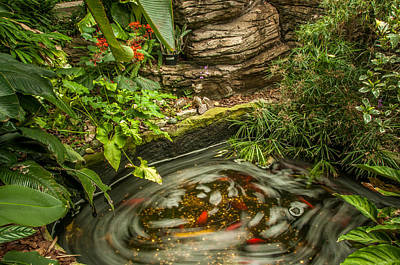 Photograph - Tropical Koi Pond Swirl by Gene Sherrill