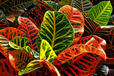 Photograph - Tropical Croton by Bill Swartwout Fine Art Photography