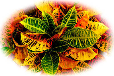 Photograph - Tropical Croton Vignette by Lisa Cortez