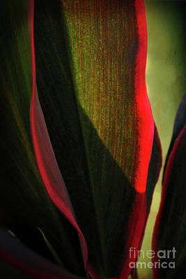 Photograph - Tropical Curves by Ellen Cotton