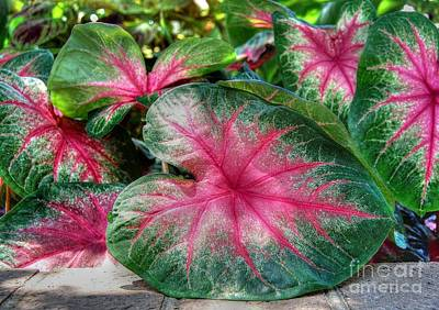 Photograph - Tropical Delight by Kathy Baccari