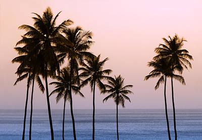 Photograph - Tropical Dream by Carolyn Derstine