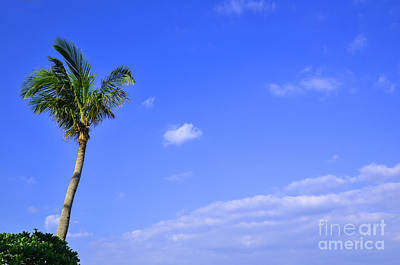 Photograph - Tropical Dream by Kennerth and Birgitta Kullman
