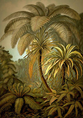 Tropical Ferns Painting - Tropical Ferns And Palm Trees by Unknown