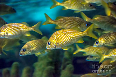 Photograph - Tropical Fish by Cheryl Baxter