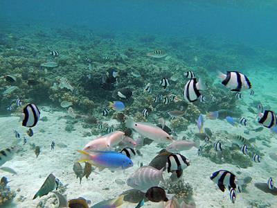 Tropical Fish, Malolo Lailai Island Art Print by David Wall