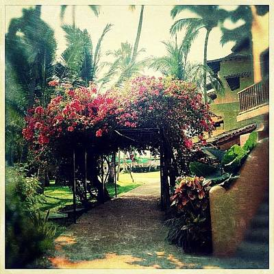 Florals Photograph - Tropical Floral Canopy by Natasha Marco