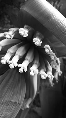 Photograph - Tropical Flower In Black And White By Kelly Hazel by Kelly Hazel