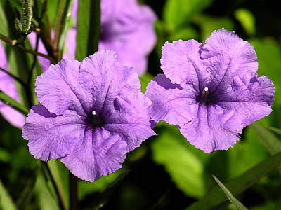 Photograph - Tropical Flower Purple by Robert Lozen