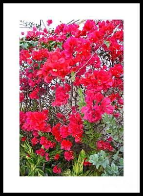 Tropical Flowers Of South Florida Art Print by Dora Sofia Caputo Photographic Design and Fine Art