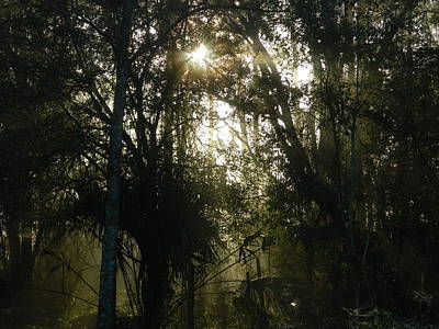 Photograph - Tropical Forest Dawn by George Pedro