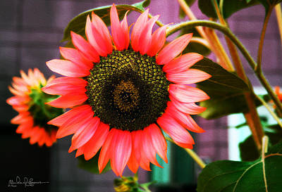 Photograph - Tropical Sunflower by Michael Soaries