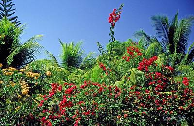 Photograph - Tropical Garden by George Tuffy