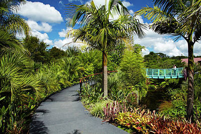Garden Bridge Photograph - Tropical Garden, Hamilton Gardens by David Wall