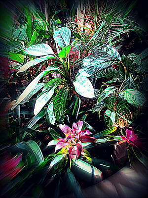 Photograph - Tropical Garden by Kay Novy