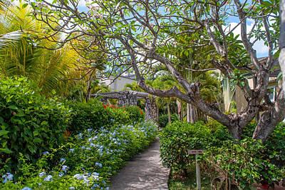 Photograph - Tropical Garden. Mauritius by Jenny Rainbow