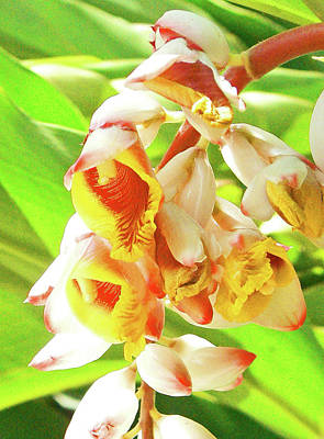 Photograph - Tropical Ginger by Margaret Saheed