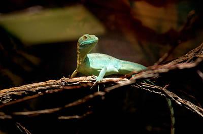 Photograph - Tropical Green Lizard by Douglas Barnett