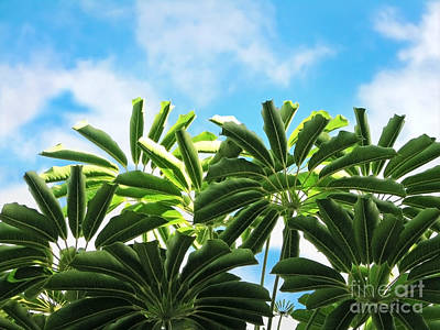 Photograph - Tropical Greens by Ellen Cotton