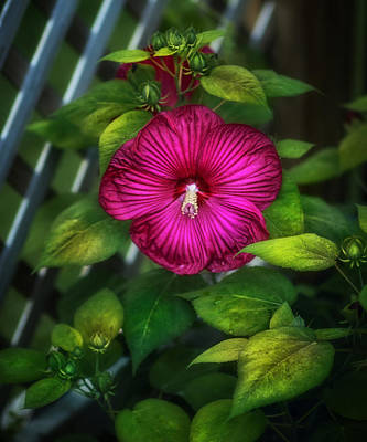 Photograph - Tropical Hibiscus by Brenda Bryant