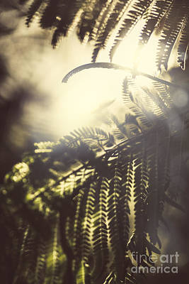 Photograph - Tropical Jungle Sundown by Jorgo Photography - Wall Art Gallery