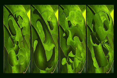 Photograph - Tropical Leaf 4 Abstract by Theo OConnor