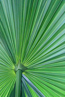 Tropical Leaf Art Print by Carolyn Stagger Cokley