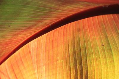 Photograph - Tropical Leave by Michael Saunders