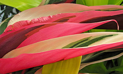 Photograph - Tropical Leaves Abstract 3 by Duane McCullough